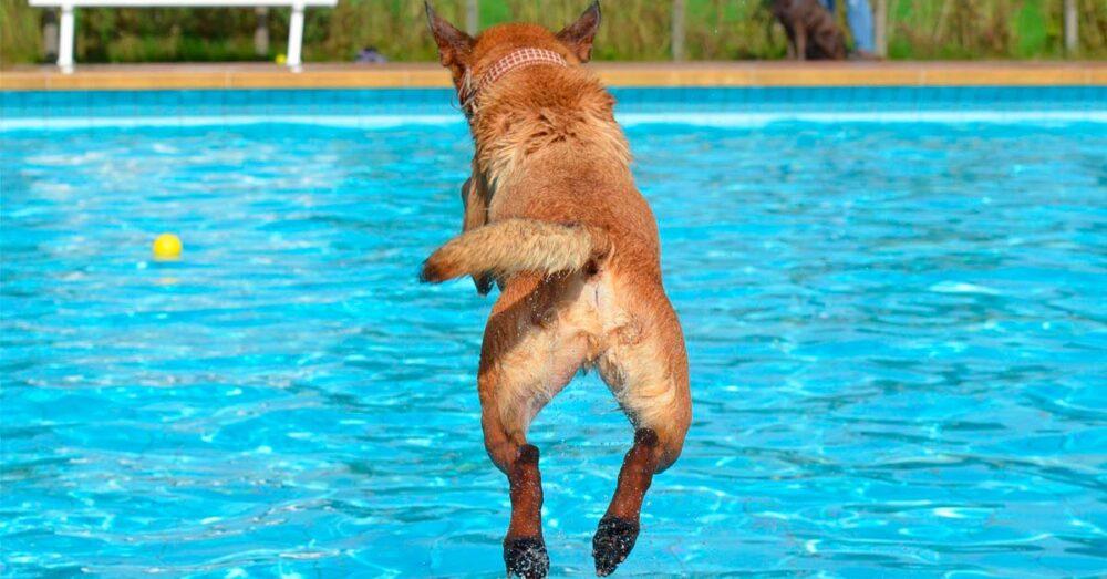 perros-en-la-piscina-consejos